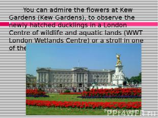 You can admire the flowers at Kew Gardens (Kew Gardens), to observe the newly ha