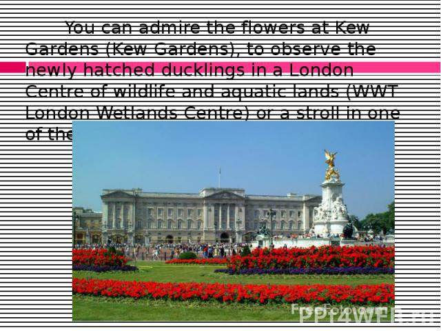 You can admire the flowers at Kew Gardens (Kew Gardens), to observe the newly hatched ducklings in a London Centre of wildlife and aquatic lands (WWT London Wetlands Centre) or a stroll in one of the beautiful Royal Parks of London. You can admire t…