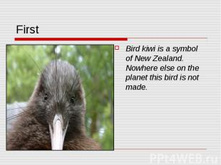 First Bird kiwi is a symbol of New Zealand. Nowhere else on the planet this bird