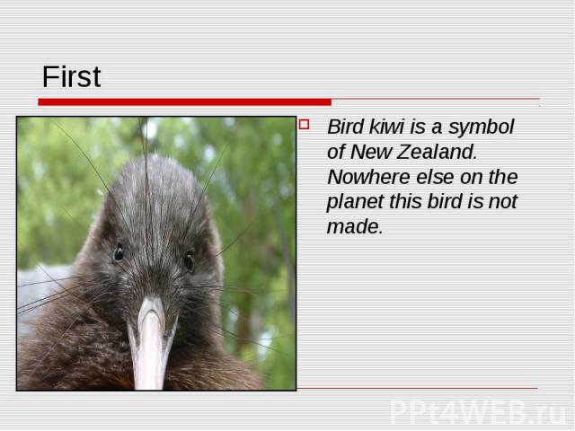 First Bird kiwi is a symbol of New Zealand. Nowhere else on the planet this bird is not made.