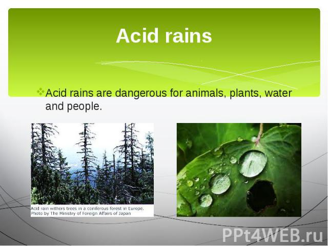 Acid rains Acid rains are dangerous for animals, plants, water and people.