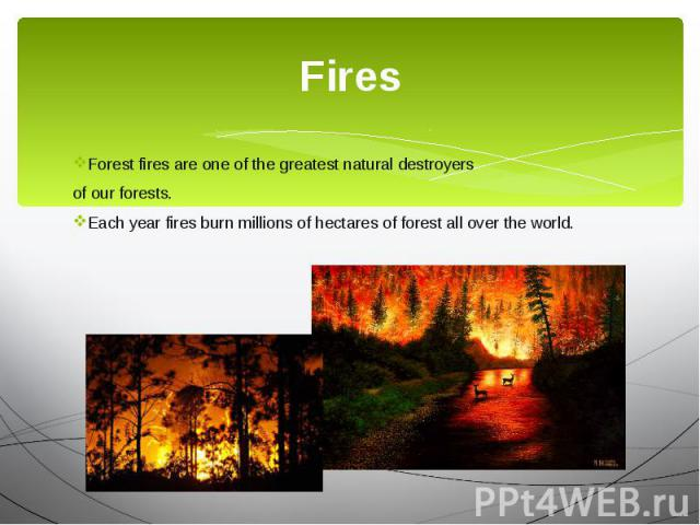 Fires Forest fires are one of the greatest natural destroyers of our forests. Each year fires burn millions of hectares of forest all over the world.