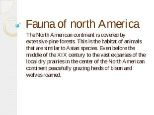 Fauna of north Аmerica The North American continent is covered by extensive pine