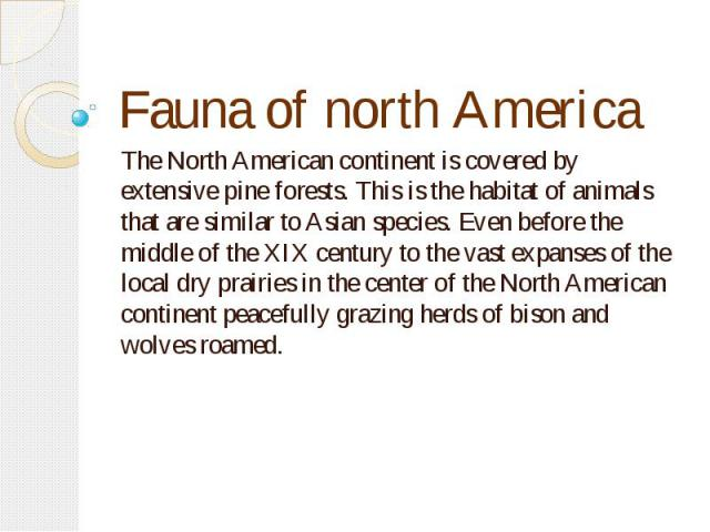 Fauna of north Аmerica The North American continent is covered by extensive pine forests. This is the habitat of animals that are similar to Asian species. Even before the middle of the XIX century to the vast expanses of the local dry prairies in t…