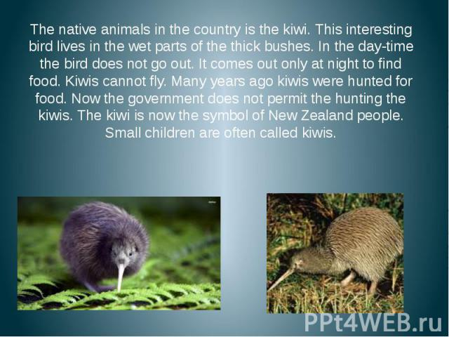 The native animals in the country is the kiwi. This interesting bird lives in the wet parts of the thick bushes. In the day-time the bird does not go out. It comes out only at night to find food. Kiwis cannot fly. Many years ago kiwis were hunted fo…