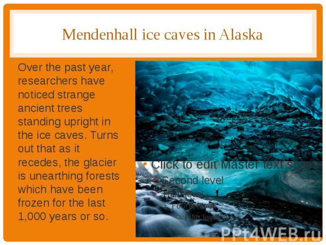 Mendenhall ice caves in Alaska Over the past year, researchers have noticed strange ancient trees standing upright in the ice caves. Turns out that as it recedes, the glacier is unearthing forests which have been frozen for the last 1,000 years or so.