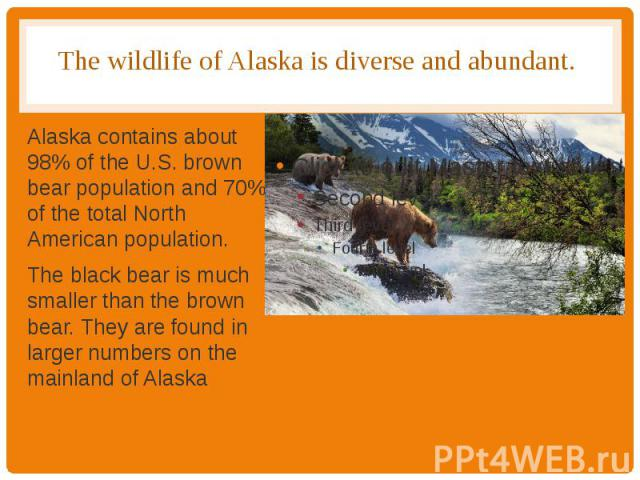 The wildlife of Alaska is diverse and abundant. Alaska contains about 98% of the U.S. brown bear population and 70% of the total North American population. The black bear is much smaller than the brown bear. They are found in larger numbers on the m…