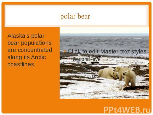 polar bear Alaska's polar bear populations are concentrated along its Arctic coastlines.