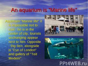 """An aquarium is """"Marine life"""" Aquarium """"Marine life"""" it is im"""