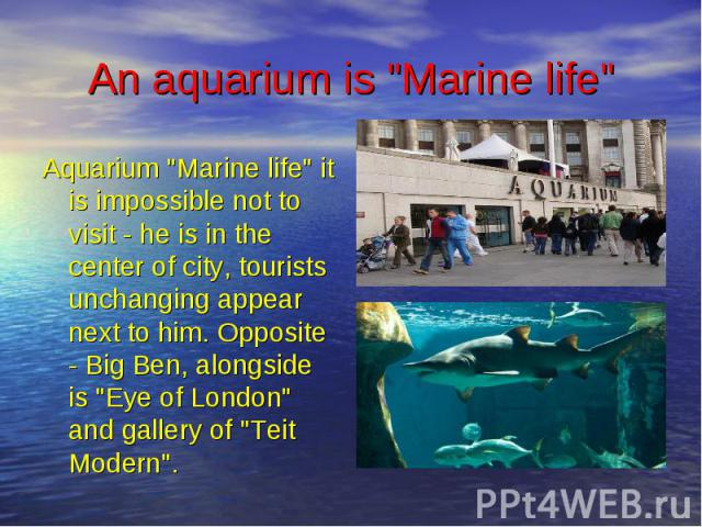 """An aquarium is """"Marine life"""" Aquarium """"Marine life"""" it is impossible not to visit - he is in the center of city, tourists unchanging appear next to him. Opposite - Big Ben, alongside is """"Eye of London"""" and gallery of &q…"""