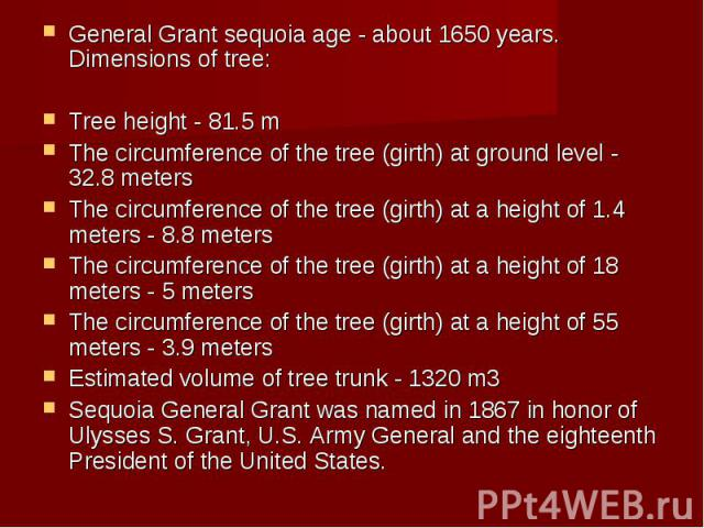 General Grant sequoia age - about 1650 years. Dimensions of tree: General Grant sequoia age - about 1650 years. Dimensions of tree: Tree height - 81.5 m The circumference of the tree (girth) at ground level - 32.8 meters The circumference of the tre…
