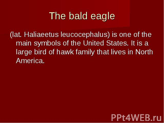 The bald eagle (lat. Haliaeetus leucocephalus) is one of the main symbols of the United States. It is a large bird of hawk family that lives in North America.