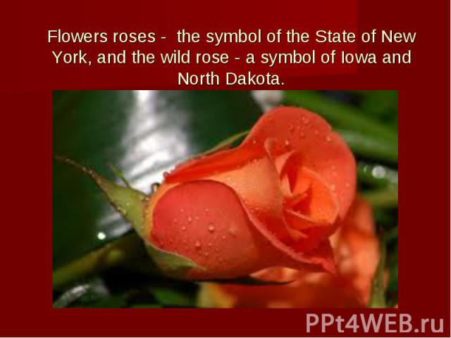Flowers roses - the symbol of the State of New York, and the wild rose - a symbol of Iowa and North Dakota.