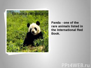 Panda - one of the rare animals listed in the International