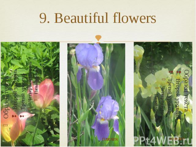 9. Beautiful flowers
