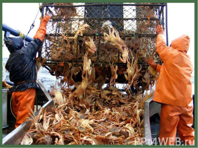 """5. Crab Fisherman 5. Crab Fisherman Immortalized in the hit reality TV series """"The Deadliest Catch,"""" crab fishermen comb the freezing and dangerous Alaskan sea in the hunt for crabs despite the inherent dangers of getting entangled by the crab-catch…"""