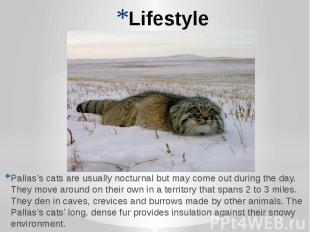 Lifestyle Pallas's cats are usually nocturnal but may come out during the day. T