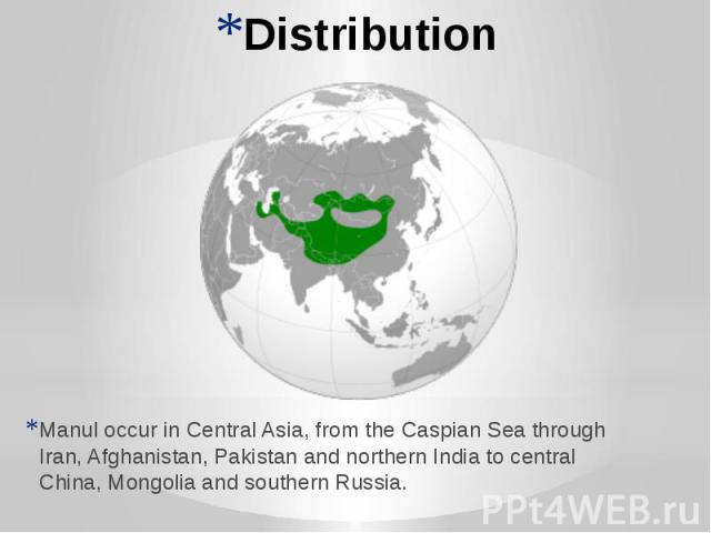 Distribution Manul occur in Central Asia, from the Caspian Sea through Iran, Afghanistan, Pakistan and northern India to central China, Mongolia and southern Russia.