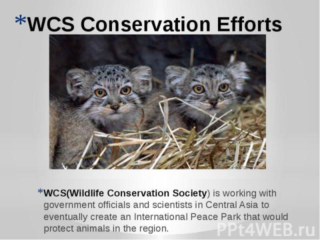 WCS Conservation Efforts WCS(Wildlife Conservation Society) is working with government officials and scientists in Central Asia to eventually create an International Peace Park that would protect animals in the region.