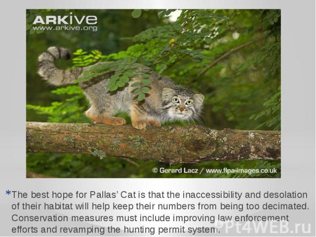 The best hope for Pallas' Cat is that the inaccessibility and desolation of their habitat will help keep their numbers from being too decimated. Conservation measures must include improving law enforcement efforts and revamping the hunting permit system.