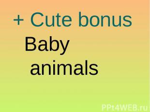 + Cute bonus Baby animals