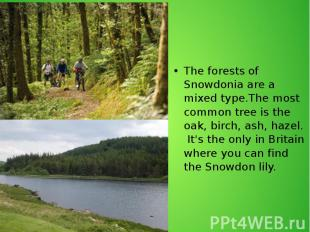 The forests of Snowdonia are a mixed type.The most common tree is the oak, birch