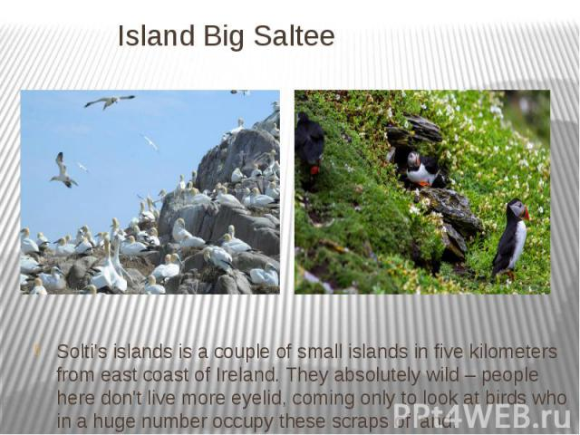 Island Big Saltee Solti's islands is a couple of small islands in five kilometers from east coast of Ireland. They absolutely wild – people here don't live more eyelid, coming only to look at birds who in a huge number occupy these scraps of land.