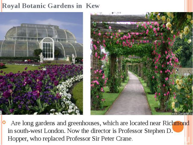 Royal Botanic Gardens in Kew  Are long gardens and greenhouses, which are located near Richmond in south-west London. Now the director is Professor Stephen D. Hopper, who replaced Professor Sir Peter Crane.