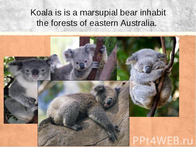 Koala is is a marsupial bear inhabit the forests of eastern Australia.