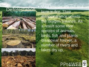 Deforestation Vast forests are cut and burn in fire. Their disappearance upsets