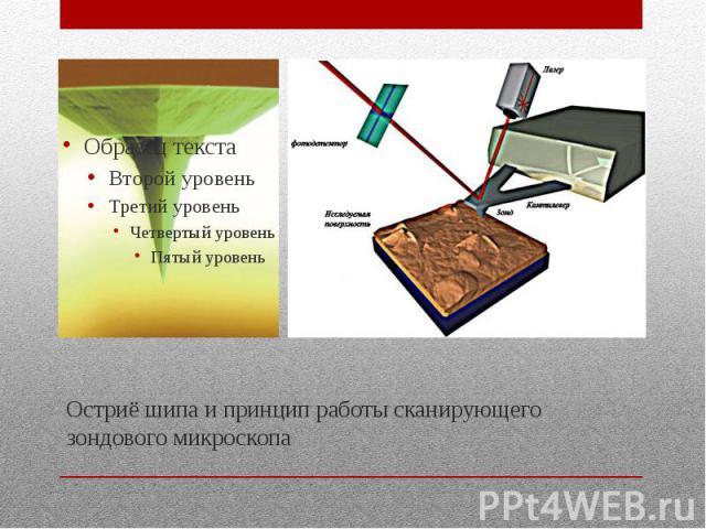 Остриё шипа и принцип работы сканирующего зондового микроскопа
