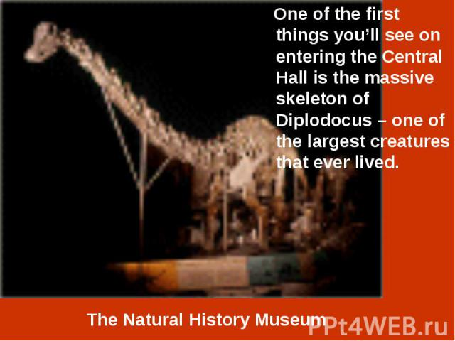 One of the first things you'll see on entering the Central Hall is the massive skeleton of Diplodocus – one of the largest creatures that ever lived. One of the first things you'll see on entering the Central Hall is the massive skeleton of Diplodoc…