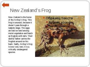 New Zealand's Frog