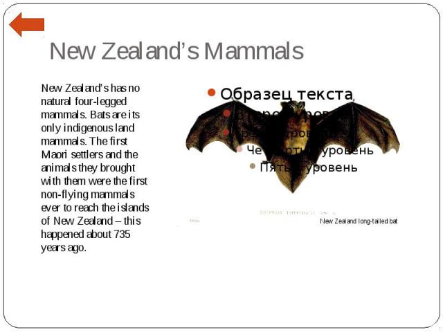 New Zealand's Mammals