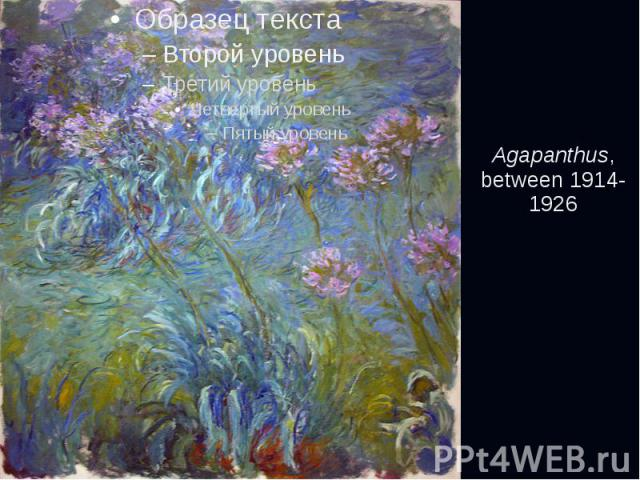 Agapanthus, between 1914-1926