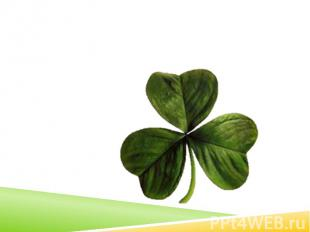 According to legend, Saint Patrick used the three-leaved shamrock to explain the