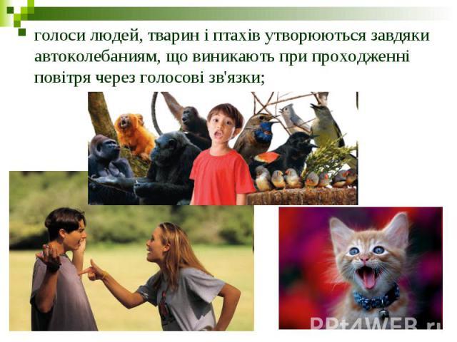 голоси людей, тварин і птахів утворюються завдяки автоколебаниям, що виникають при проходженні повітря через голосові зв'язки;