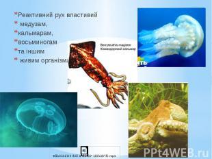 Реактивний рух властивий Реактивний рух властивий медузам, кальмарам, восьминога