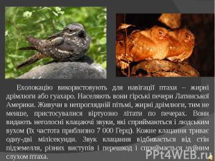 Ехолокацію використовують для навігації птахи – жирні дрімлюги або гуахаро. Насе