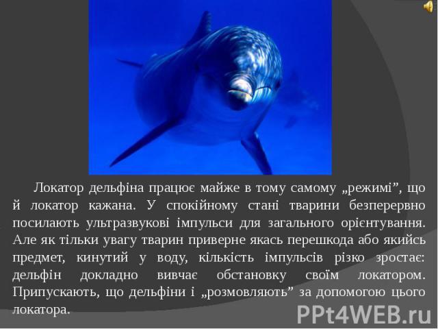 """Локатор дельфіна працює майже в тому самому """"режимі"""", що й локатор кажана. У спокійному стані тварини безперервно посилають ультразвукові імпульси для загального орієнтування. Але як тільки увагу тварин приверне якась перешкода або якийсь предмет, к…"""