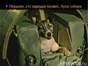 Першою, хто відвідав космос, була собака Лайка. Першою, хто відвідав космос, бул