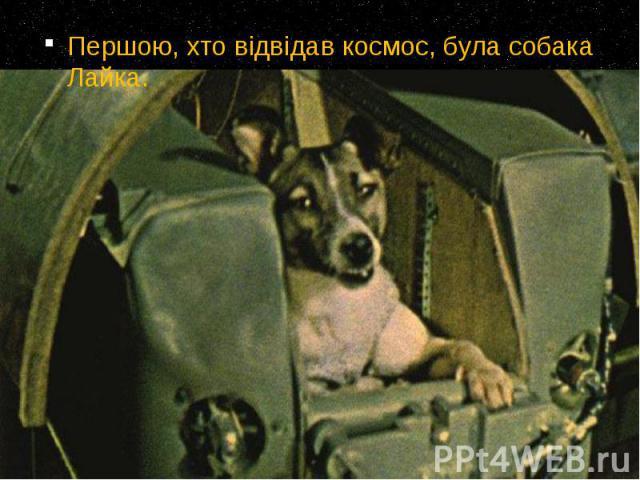 Першою, хто відвідав космос, була собака Лайка. Першою, хто відвідав космос, була собака Лайка.