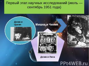 Первый этап научных исследований (июль — сентябрь 1951 года) Мишка и Чижик