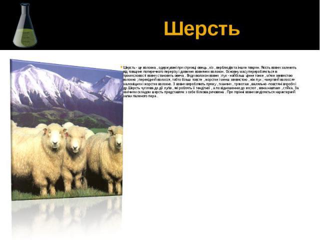 Шерсть Шерсть - це волокна , одержувані при стрижці овець , кіз , верблюдів та інших тварин. Якість вовни залежить від товщини поперечного перерізу і довжини вовняних волокон. Основну масу переробляється в промисловості вовни становить овеча . Види …