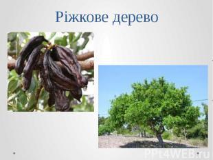 Ріжкове дерево