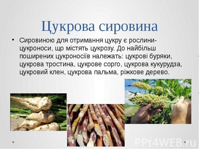 Цукрова сировина Сировиною для отримання цукру є рослини-цукроноси, що містять цукрозу. До найбільш поширених цукроносіїв належать: цукрові буряки, цукрова тростина, цукрове сорго, цукрова кукурудза, цукровий клен, цукрова пальма, ріжкове дерево.