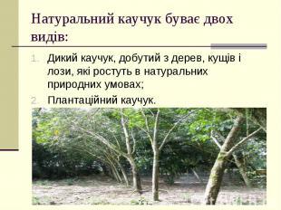 Натуральний каучук буває двох видів: Дикий каучук, добутий з дерев, кущів і лози