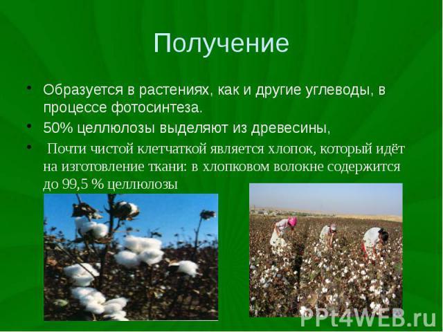 Получение Образуется в растениях, как и другие углеводы, в процессе фотосинтеза. 50% целлюлозы выделяют из древесины, Почти чистой клетчаткой является хлопок, который идёт на изготовление ткани: в хлопковом волокне содержится до 99,5% целлюлозы