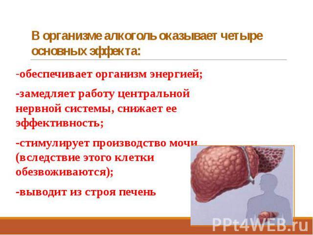 В организме алкоголь оказывает четыре основных эффекта: -обеспечивает организм энергией; -замедляет работу центральной нервной системы, снижает ее эффективность; -стимулирует производство мочи (вследствие этого клетки обезвоживаются); -выводит из ст…