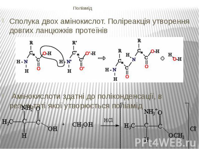 Поліамід Сполука двох амінокислот. Поліреакція утворення довгих ланцюжківпротеїнів Амінокислоти здатні до поліконденсації, в результаті якої утворюєтьсяполіамід